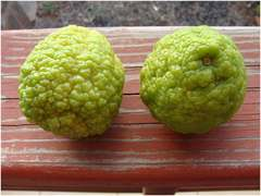 how to get fruit on kafir lime